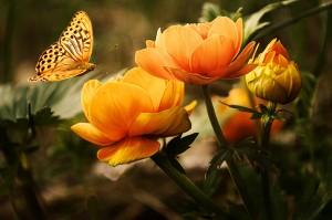 butterfly_flowers-19830